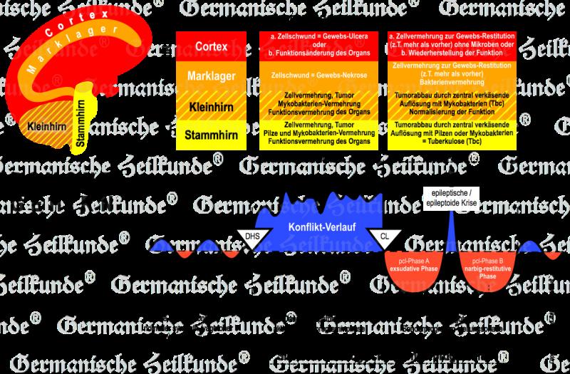 Der Hamersche Kompass - Germanische Heilkunde