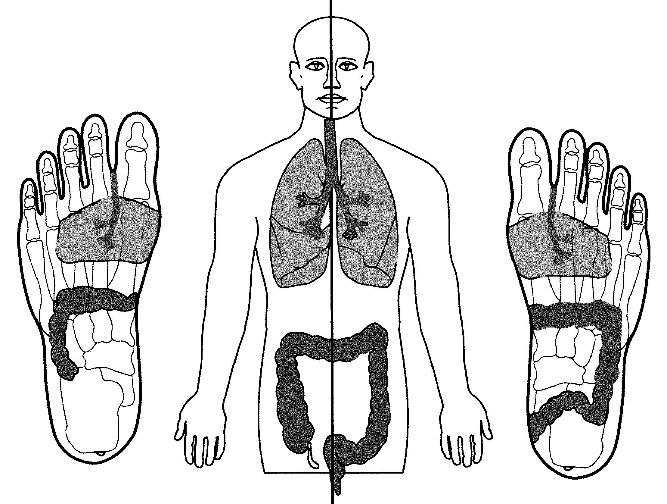 Fussreflexzonen - Organ-Entsprechung