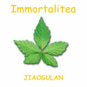Jiaogulan_Immortalitea_300