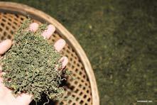 Jiaogulan-Blätter getrocknet